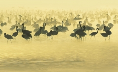 crane-animals-flamingos-south-africa-swamp-animal-planet-nature-wallpaper-photo-wild-picture1