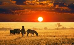 african_savannah_hd_widescreen_wallpapers_1280x800