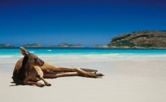 Nature-beaches-pictures-of-Australia