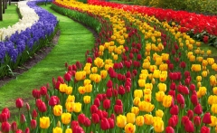 tulip-festival_1
