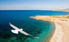Bird over sea