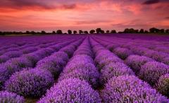 san-rocco-blog-22-02-2016-lavender-sunset-istria