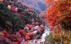 kyoto_autumn