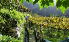 discovering-madeira-imageLinkat-the-vineyards-madeira-wine-tours-slideshow-1280x7201