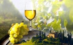 wine tasting divine tours tuscany